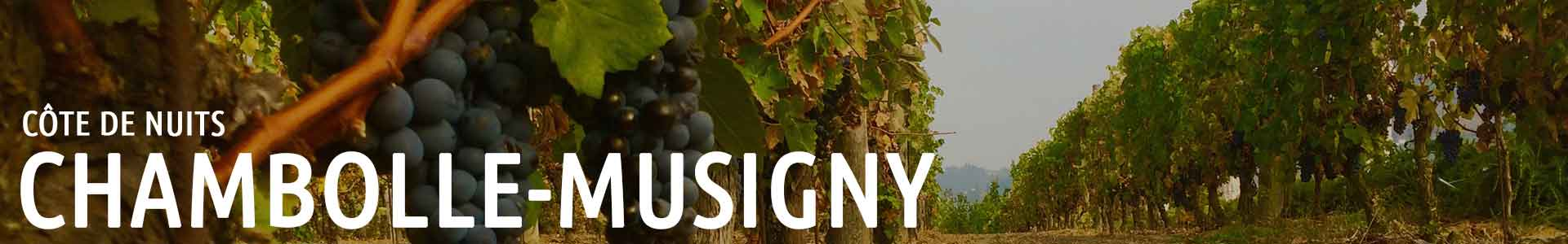 Pleasure Wine: Chambolle-Musigny Wines